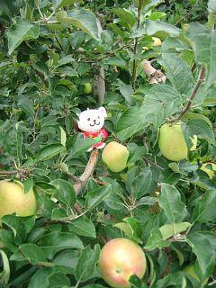 りんごの実といっしょ