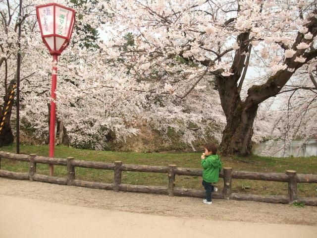 桜の下でアイスクリン